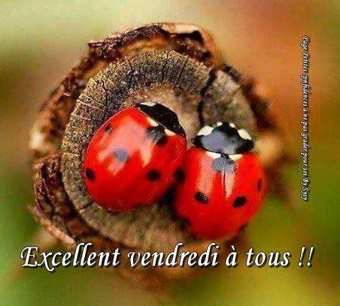 BONJOUR-BONSOIR DU MOIS D'AOUT - Page 4 52bc9394